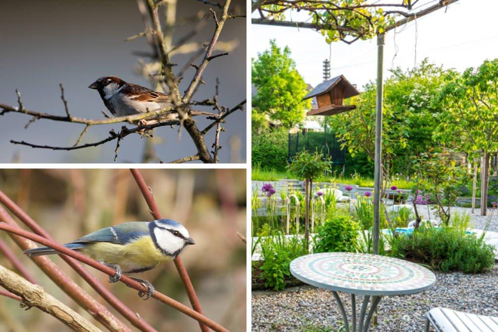 Vögel im Winter Spatzen Blaumeise Naturgarten