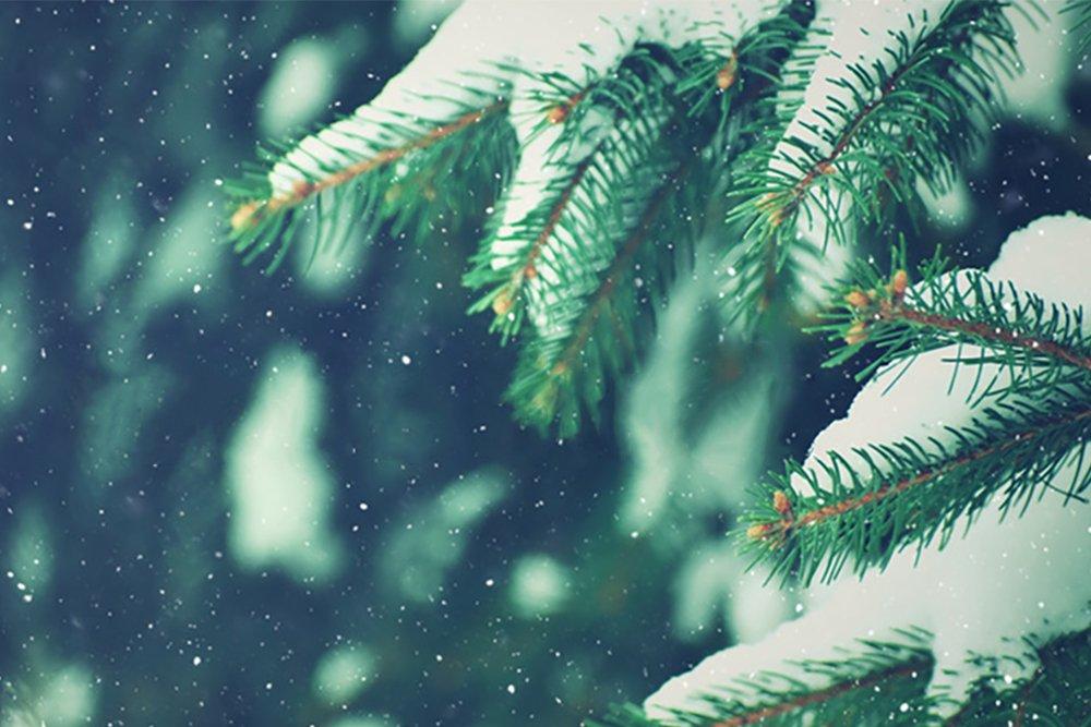 Tannenbaum Weihnachstbaum Christbaum Bio
