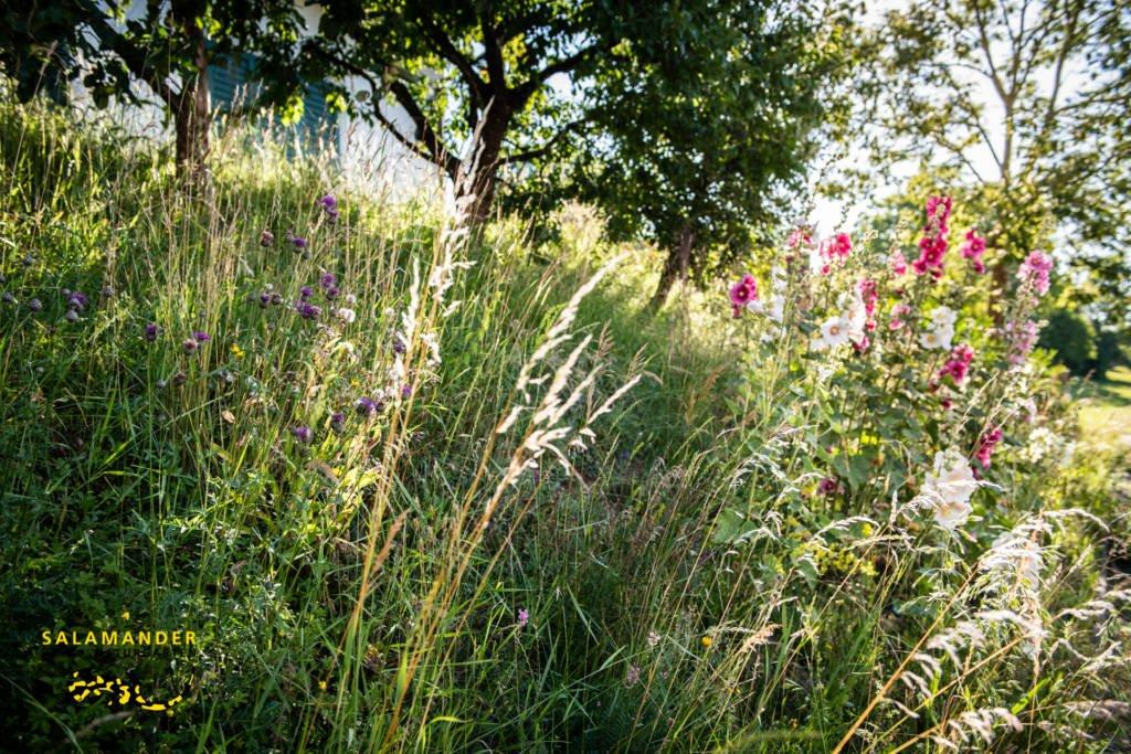 Blumenwiese Naturgarten