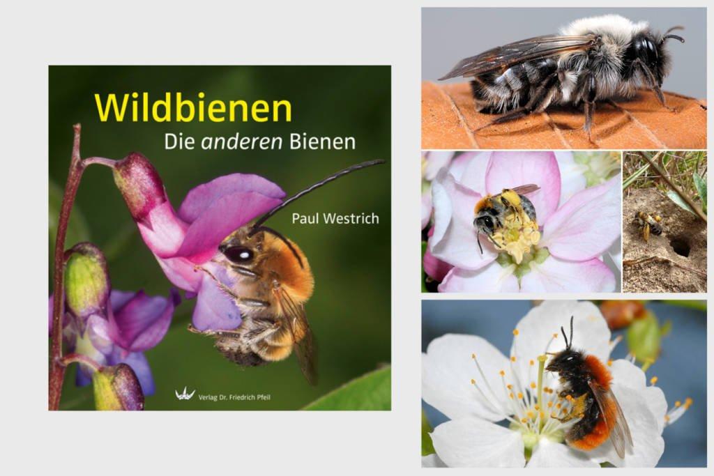 Buchtipp Wildbienen