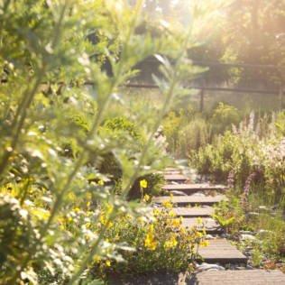 Gelebte Gartenleidenschaft – Willkommen!
