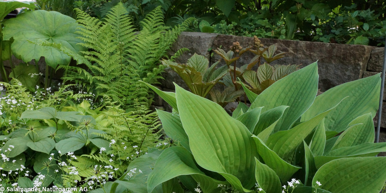 Ehrfürchtig Garten Pflege Ideen