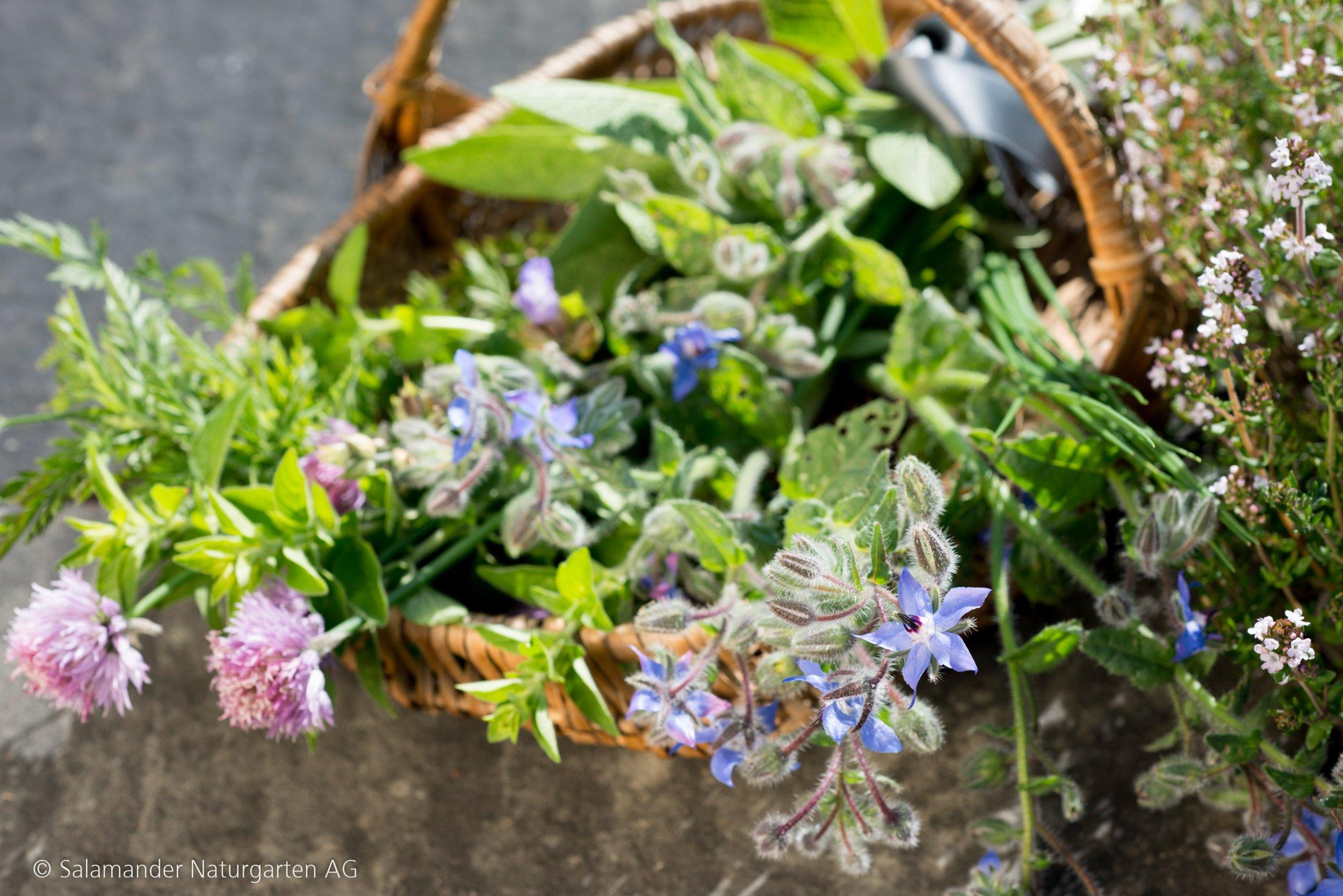 Sammlung an Kräutern aus dem Garten