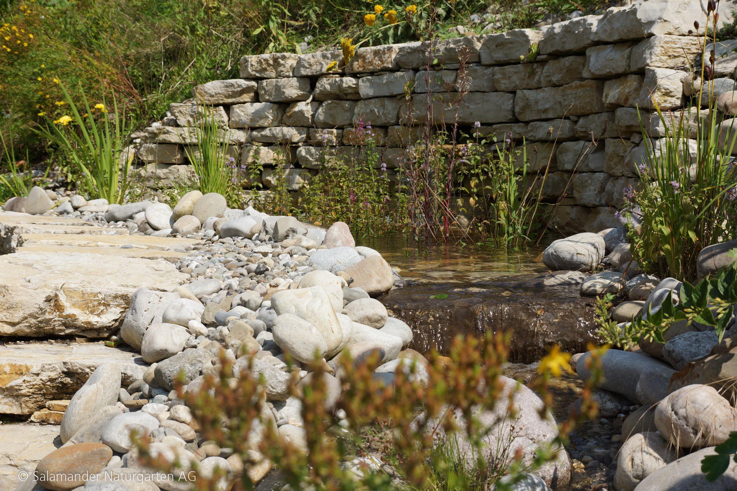 Gewürzpflanzen am Wasser