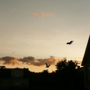 Kleinstrukturen für Fledermäuse