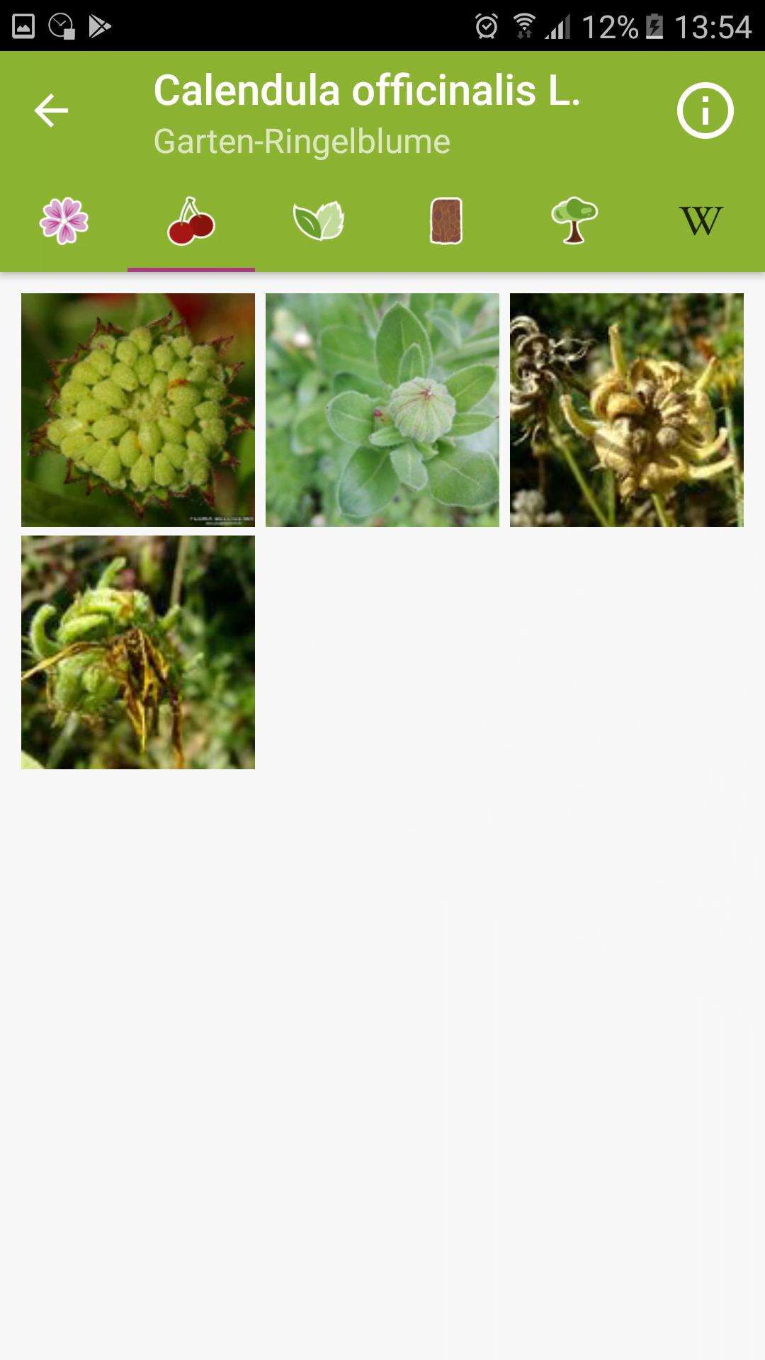 Fotosammlung zu Frucht einer Art