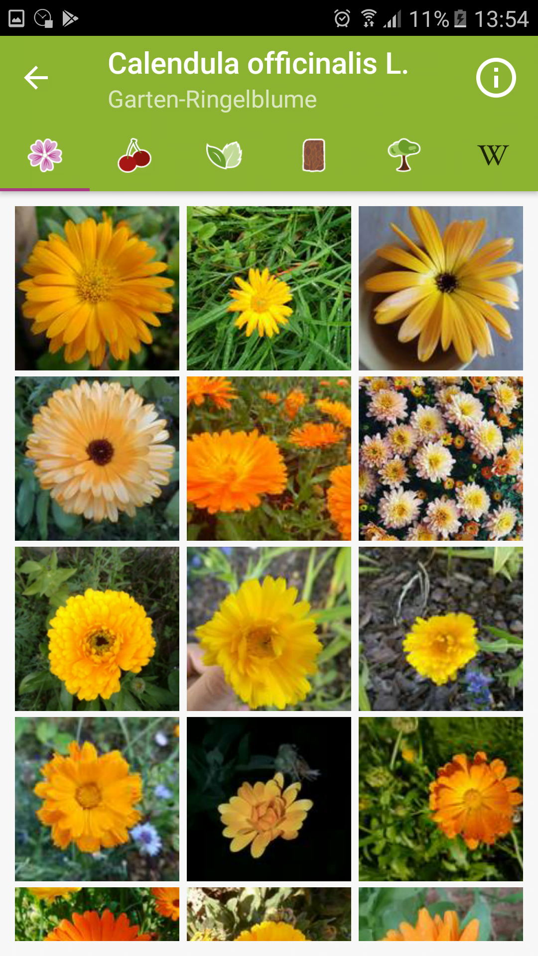 Fotosammlung zu Blüte einer Art