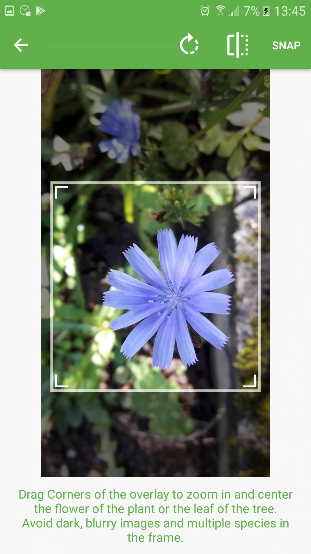 Snap einer Blüte zum Bestimmen