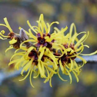 Pflanzenvielfalt zwischen Dezember und März