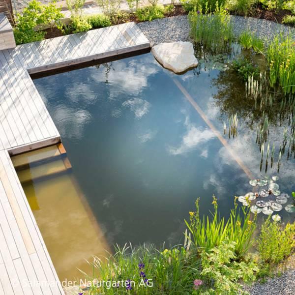 Beliebt Bevorzugt Schwimmteich - die natürliche Variante - Salamander Naturgarten AG @LK_88