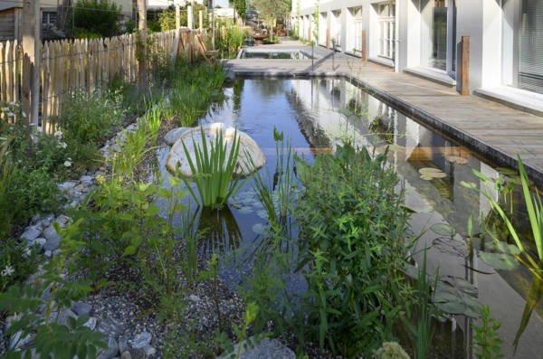 Salamander Showgarten Schwimmteich
