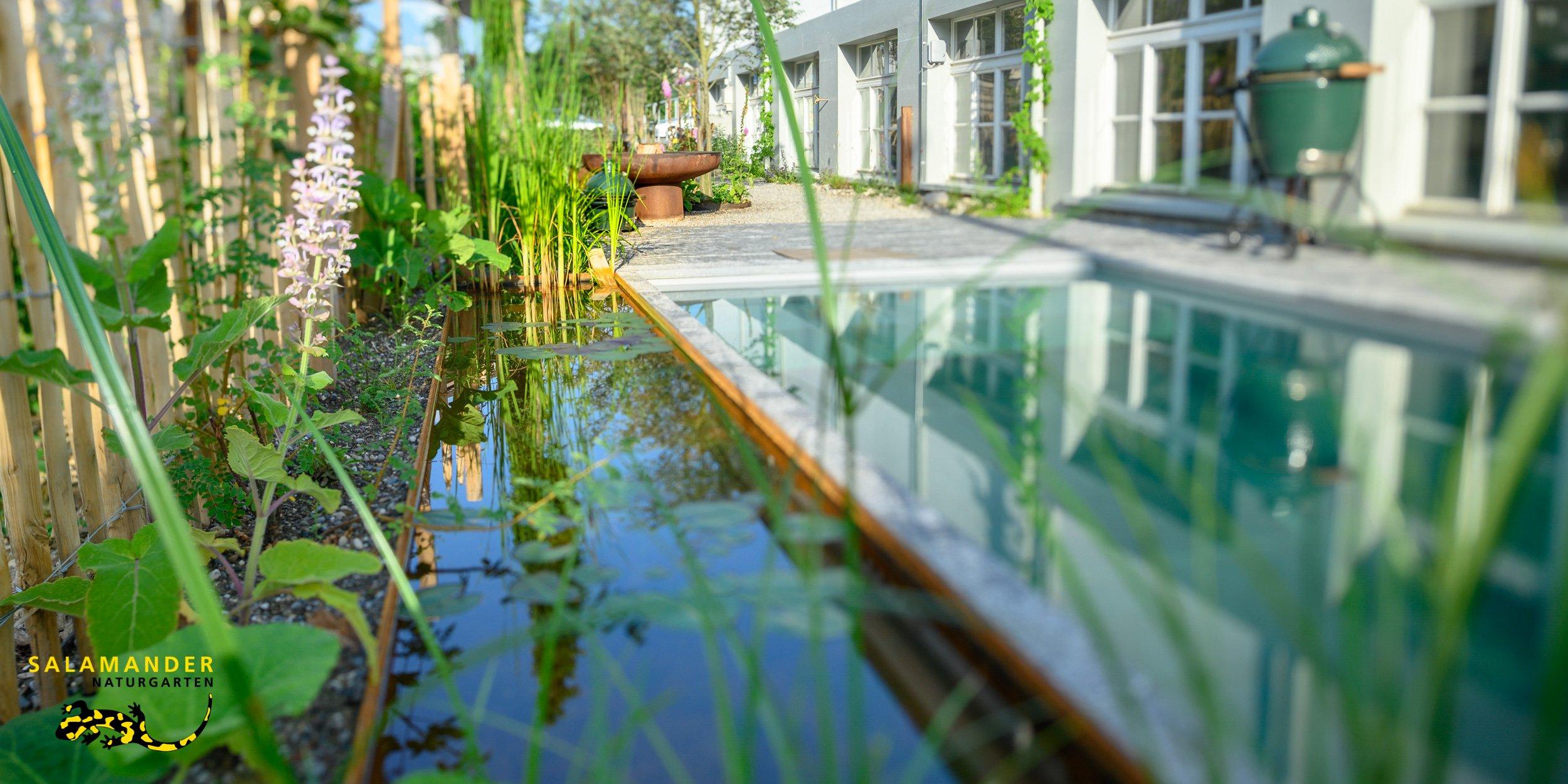 Artenvielfalt UND klares Wasser