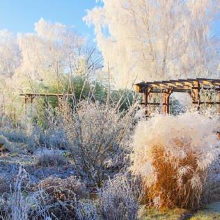 Gartenfreuden im Winter