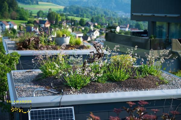 Garten auf Augenhöhe, Flachdach Bepflanzung