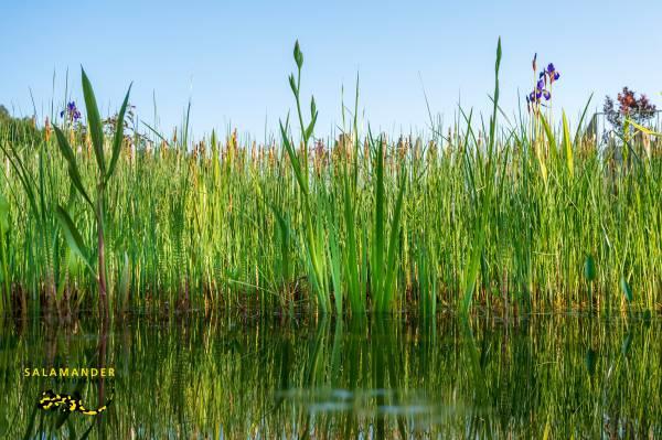 Garten auf Augenhöhe, Schwimmteich Bepflanzung