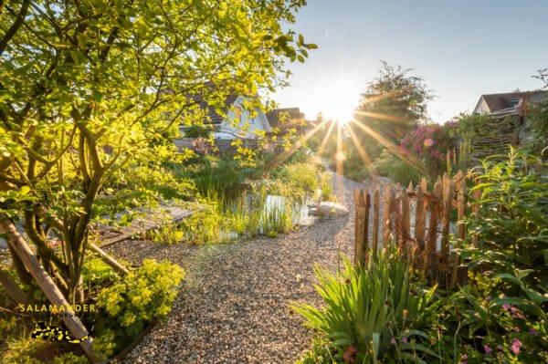 Goldene Morgensonne im Bilderbuch-Naturgarten mit Schwimmteich