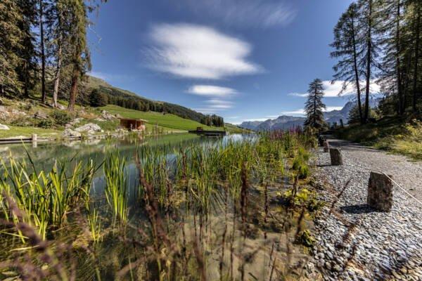 Badesee in Ftan Graubünden Unterengadin Lai da Padnal Wasserpflanzen Bergpanorama