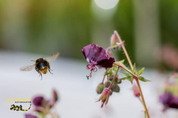 Kraft der Farben Biene