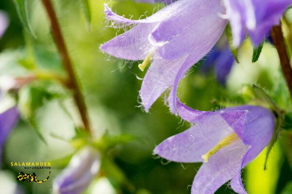 Kraft der Farben Violett
